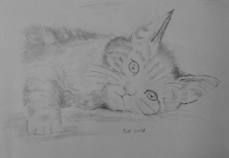 Bleistiftzeichnung, Miezzi, Katze, Zeichnungen