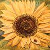 Gelb, Käfer, Sonnenblumen, Pastellmalerei