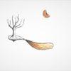 Landschaft, Mandarine, Zitrusfrüchte, Baum