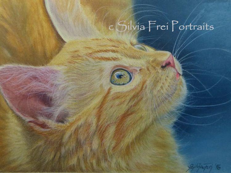 Katze, Main coon, Pastellmalerei, Haustier, Tiere, Neugier