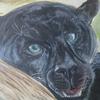 Zähne, Panther, Augen, Malerei