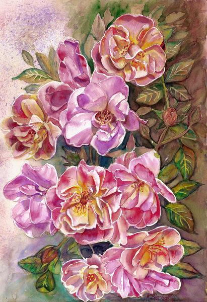 Hecke, Rose, Aquarellmalerei, Aquarell