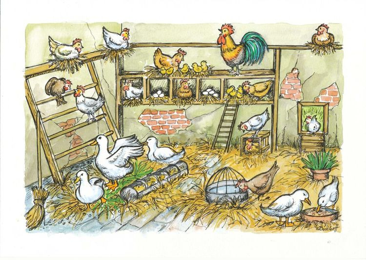 Leiter, Ente, Stroh, Huhn, Stall, Illustrationen