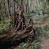 Wurzel, Wald, Moor, Usedom