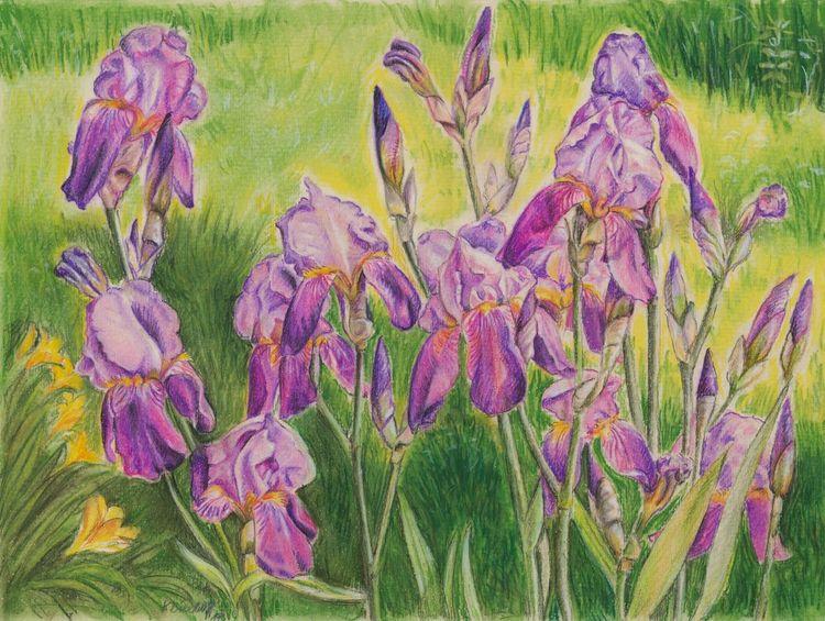 Schwertlilien, Pastellmalerei, Violett, Zeichnungen