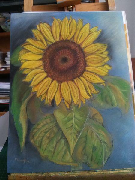 Sonnenblumen, Pastellmalerei, Gelb, Zeichnungen