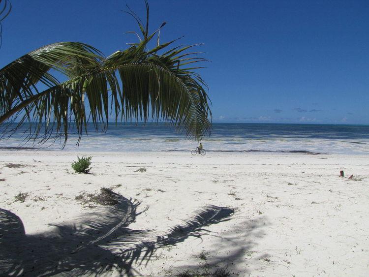 Strand, 2013, Fahrrad, Palmwedel, Sansibar, Fotografie