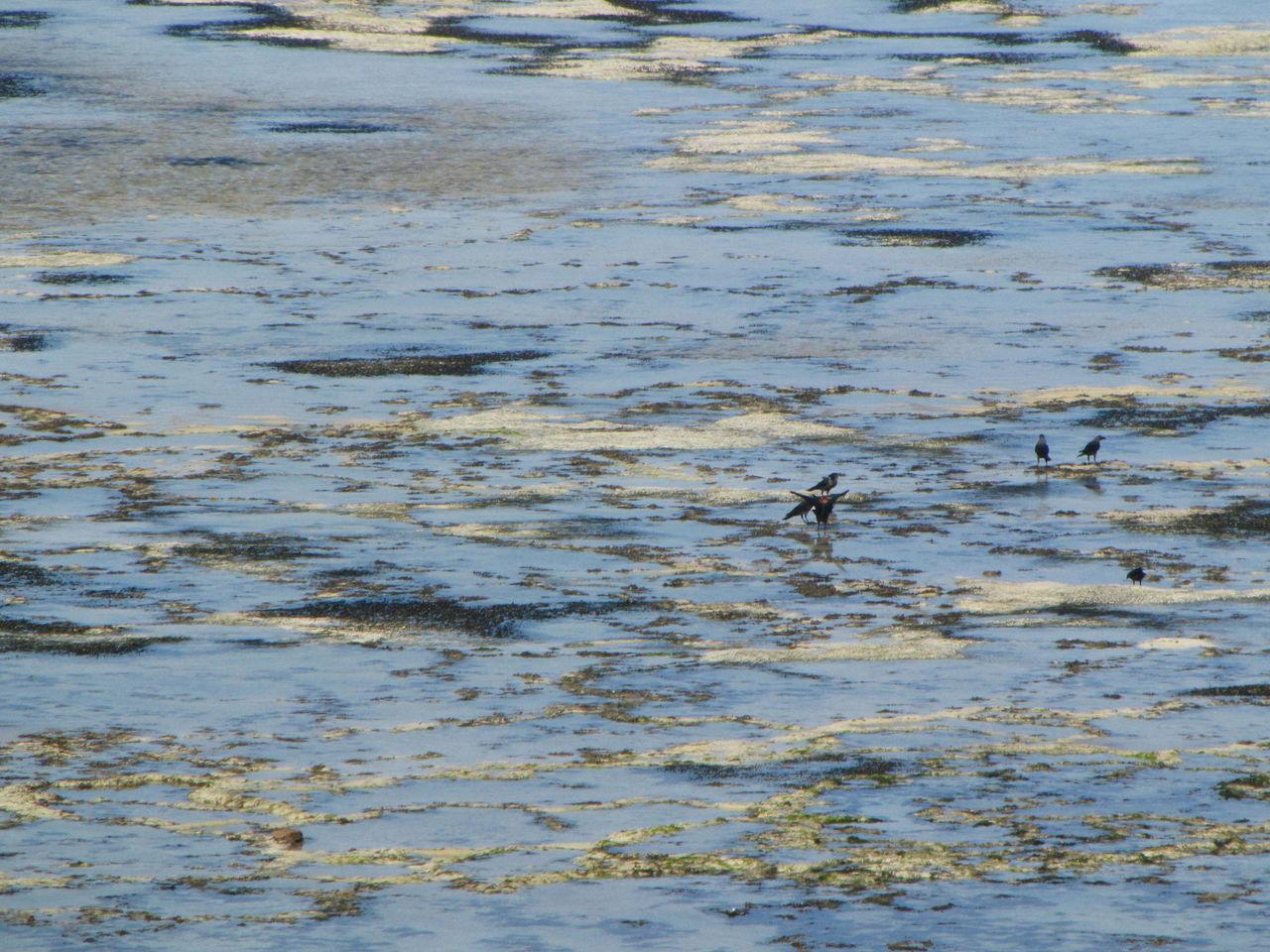 am strand vögeln