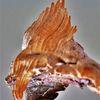 Urzeit, Rückenflosse, Seitenflossen, Fisch