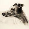 Zeichnung, Kohlezeichnung, Wasserfarben, Hund