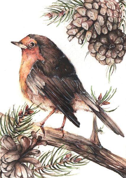 Singvogel, Vogel, Tannenzapfen, Tanne, Zweig, Aquarellmalerei