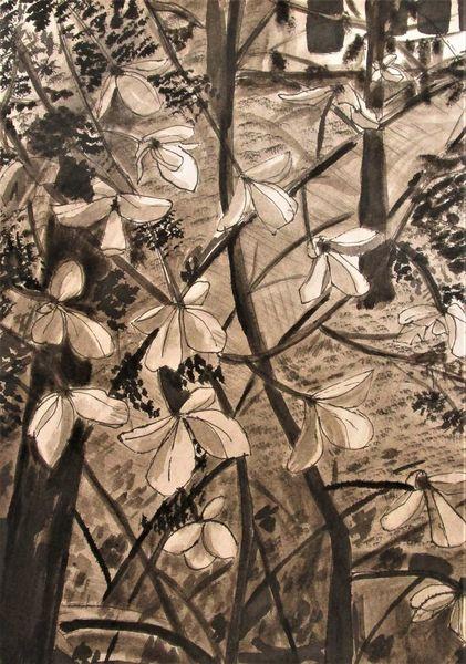 Blumen, Tusche, Zeichnung, Hortensien, Zeichnungen