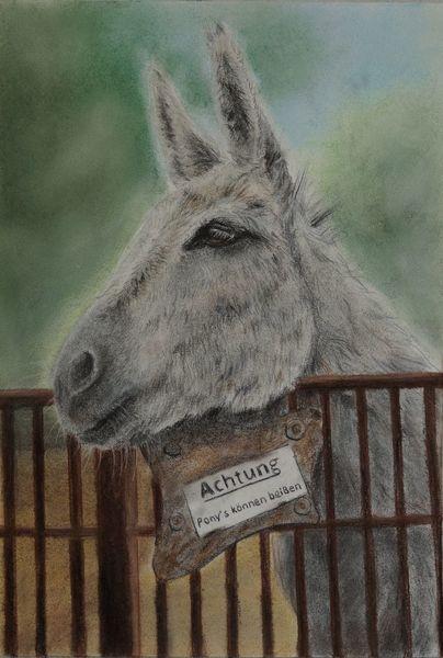 Tiere, Donkey, Esel, Zeichnungen