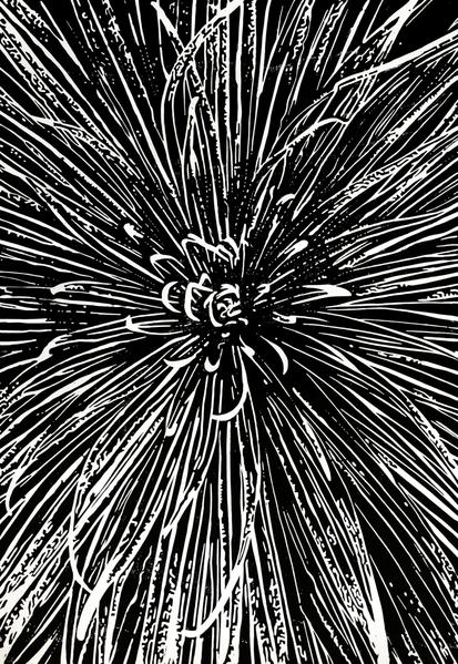 Linolschnitt, Blumen, Nebenbeigekritzel, Druckgrafik