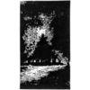 Lichtspiel, Nebenbeigekritzel, Wald, Linolschnitt