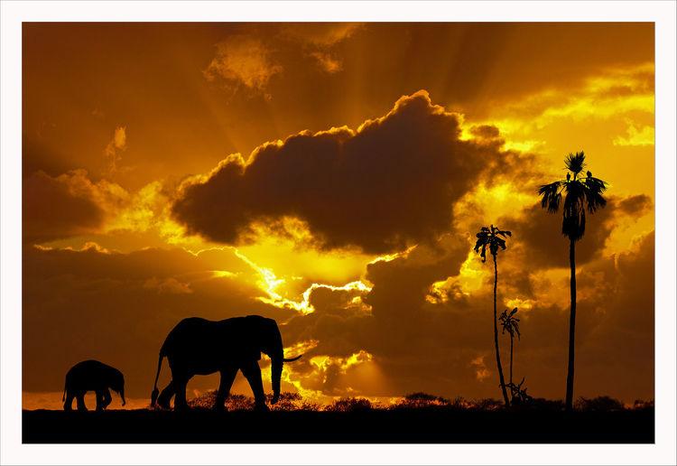 Elefant, Himmel, Afrika, Wolken, Savanne, Bunt