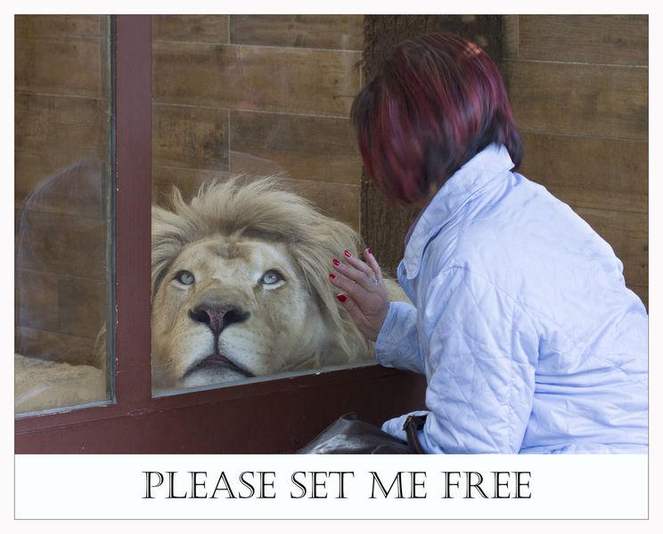 Löwe, Malen, Gefangenschaft, Gefängnis, Freihei, Leben