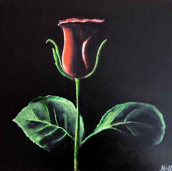 Blumen, Blätter, Rot, Grün, Rose, Natur