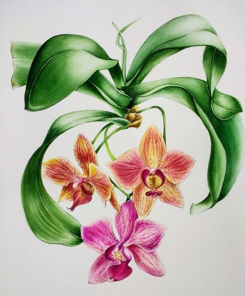 Blumen, Licht, Öko, Gold, Aquarellmalerei, Roy