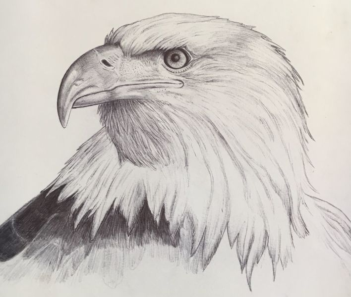 Kugelschreiber auf zeichnungspapier, Zeichnung, Adler, Zeichnungen