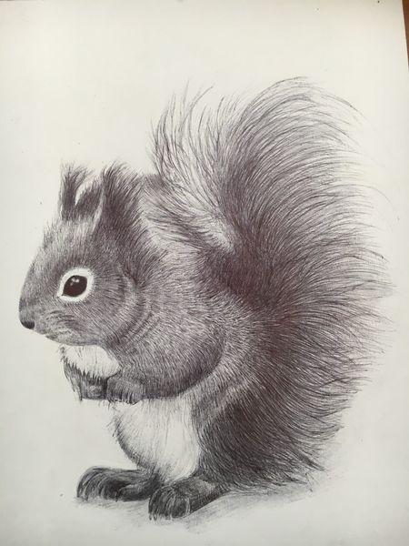 Kugelschreiber zeichnung, Eichhörnchen, Rabe, Katze, Zeichnungen