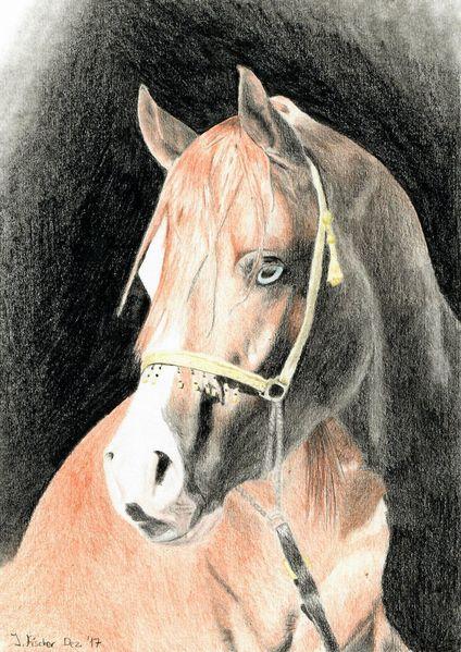 Buntstiftzeichnung, Pferde, Arabisches pferd, Zeichnungen, Portrait, Araber