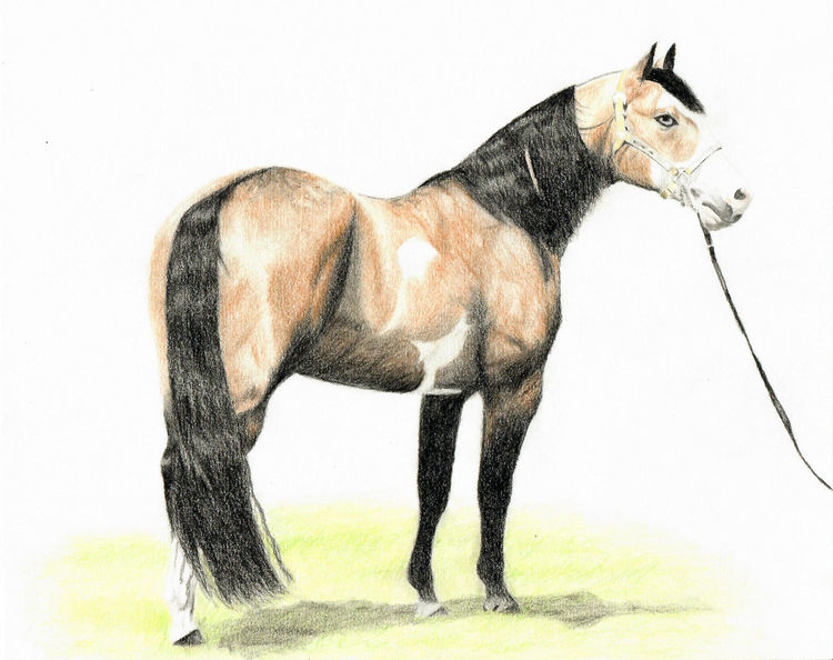 Pferde, Buntstiftzeichnung, Paint horse, Zeichnungen