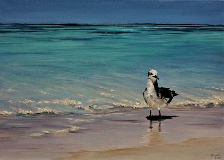 Strand, Natur, Möwe, Ölmalerei, Ozean, Meer