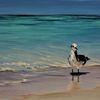 Ozean, Ölmalerei, Meer, Strand