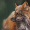 Tiere, Fuchs, Pastellmalerei, Fell