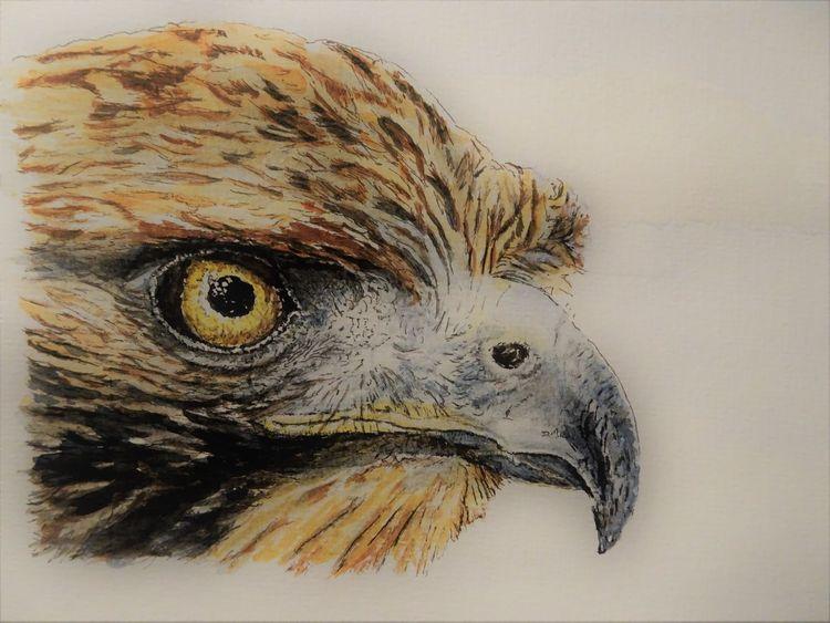 Vogel, Mischtechnik, Jagd, Schnabel, Adler, Augen