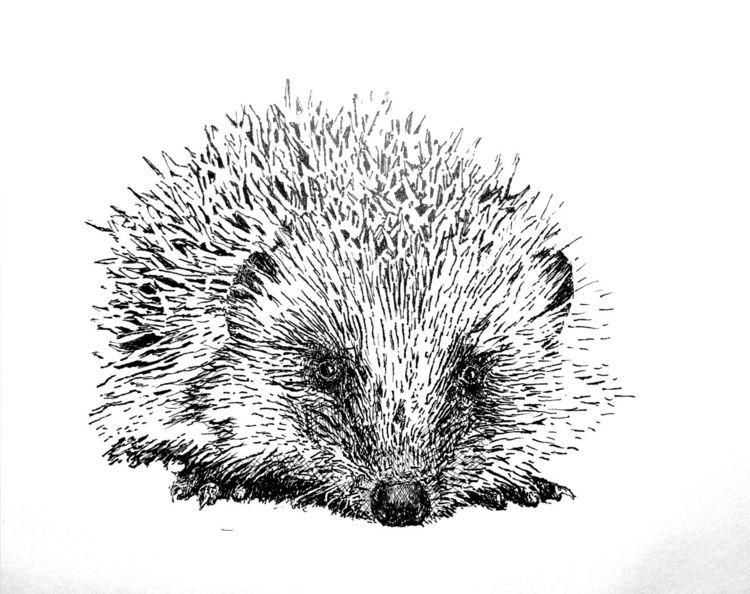 Igel, Monochrom, Federzeichnung, Zeichnungen