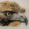 Jagd, Schnabel, Adler, Augen