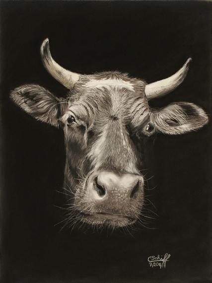 Kuh, Tierportrait, Rind, Pastellmalerei, Schwarz, Zeichnungen