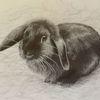 Zwergwidder, Bleistiftzeichnung, Schwarz, Kaninchen