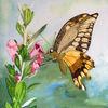 Blüte, Nektar, Schmetterling, Aquarell