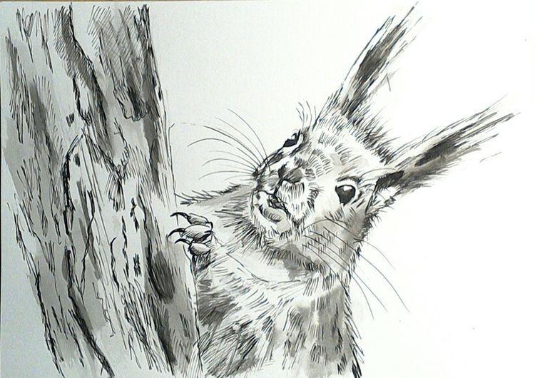 Wald, Tiere, Zeichnungen tiere, Natur, Eichhörnchen, Tuschmalerei