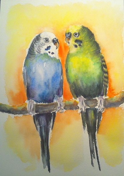 Aquarellmalerei, Blau, Tiere, Grün, Vogel, Orange