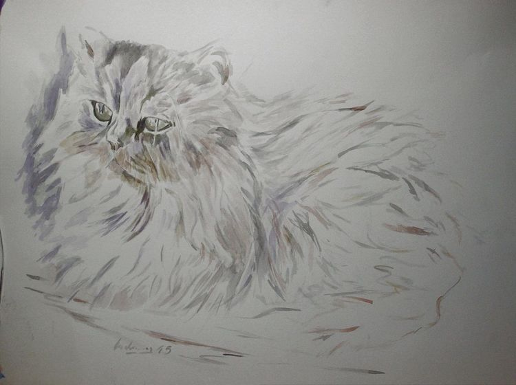 Aquarellmalerei, Perser, Katze, Weiß, Aquarell, Weise
