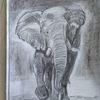 Bleistiftzeichnung, Tiere, Elefant, Zeichnungen