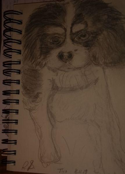 Freund, Tico, Hund, Zeichnungen
