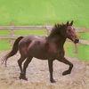 Braun, Pferde, Acrylmalerei, Pferdeliebe