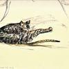 Der kater mischa, Aquarellmalerei, Martha krug, Zeichnungen