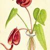 Orchidee, Martha krug, Gezeichnet in geringswalde, Malerei