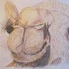Pastellmalerei, Kamel, Oman, Zeichnungen