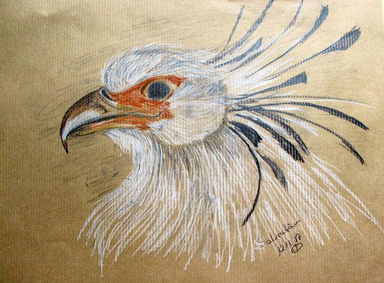 Kreide, Vogel, Sekretär, Zeichnungen