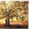 Licht, Herbst, Baum, Aquarell