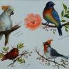 Studie, Kakadu, Hüttensänger, Papagei
