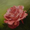 Rose, Rosa, Blüte, Grün