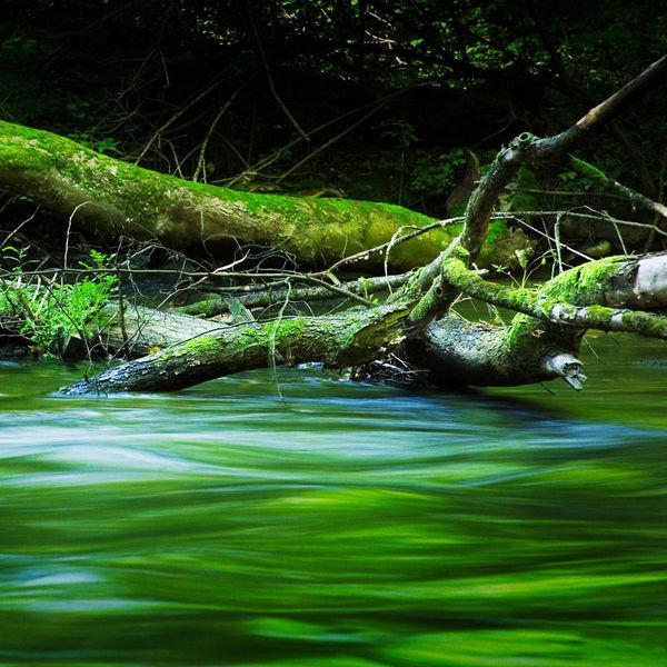 Fluss, Wasser, Moos, Bach, Fotografie